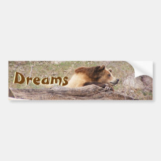Day Dreaming Grizzly Bumper Sticker