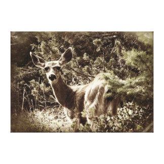 Deer - Black Tail Doe Canvas Print