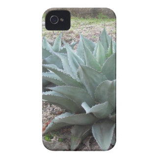 Desert Agave Plants iPhone 4 Case-Mate Cases