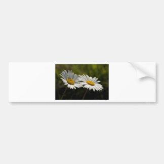 Dew Bejeweled Ox-eye Daisy Wildflowers Bumper Sticker