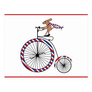 Dog Riding Vintage Bicycle on Postcard