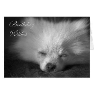 Dozing Pomeranian birthday card