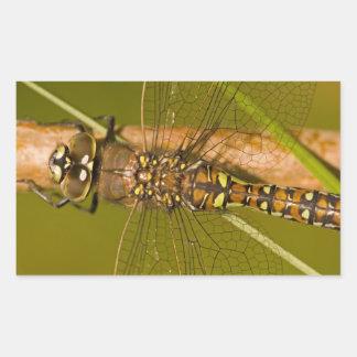 Dragonfly Macro Photo Rectangular Sticker