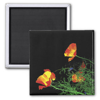 dramatic California poppies on black Square Magnet
