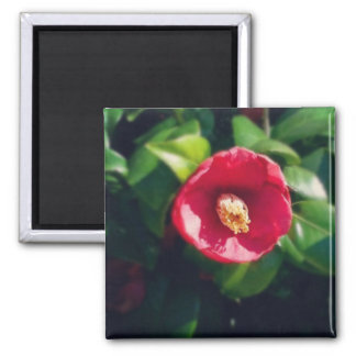 Dramatic Flower Square Magnet