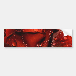 Drops on Rose Bumper Sticker
