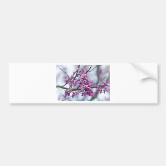 Eastern Redbud Wildflowers - Cercis canadensis Bumper Sticker