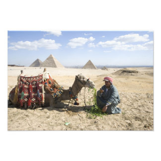 Egypt, Giza. Native man feeds his camel in Photo