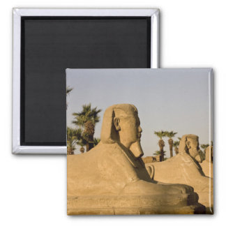 Egypt, Luxor. The Avenue of Sphinxes leads to Square Magnet