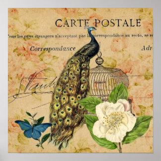 elegant floral peacock birdcage vintage paris poster