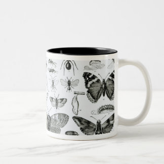 Entomology Two-Tone Mug