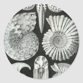 Ernst Haeckel - Ammonitida Round Sticker