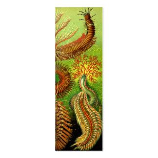 Ernst Haeckel Chaetopoda Pack Of Skinny Business Cards