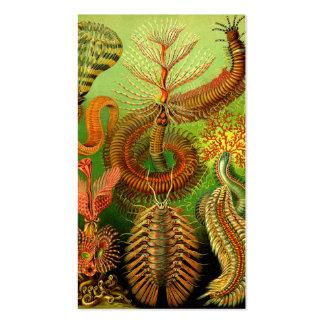 Ernst Haeckel Chaetopoda Pack Of Standard Business Cards