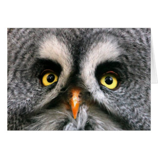 Face of a Great Grey Owl Greeting Card