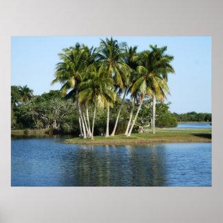 Fairchild Tropical  Botanic Gardens Poster