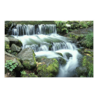 Fern Spring, Yosemite National Park Photographic Print
