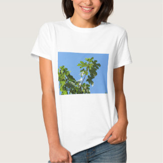 Figs on tree branches shirt