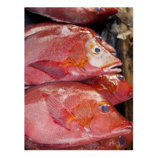 Fish at market, town of Kalabahi, Alor Island, Postcard