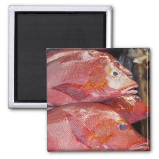 Fish at market, town of Kalabahi, Alor Island, Square Magnet