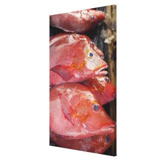 Fish at market, town of Kalabahi, Alor Island, Stretched Canvas Prints