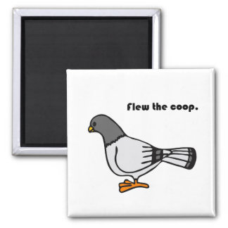 Flew the Coop Gray Pigeon Cartoon Square Magnet