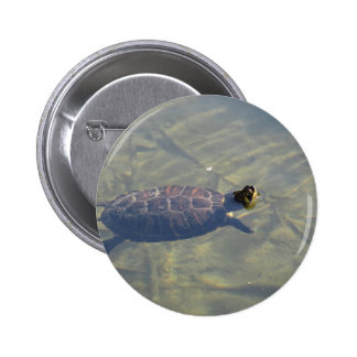 Floating turtle swimming in a pond 6 cm round badge