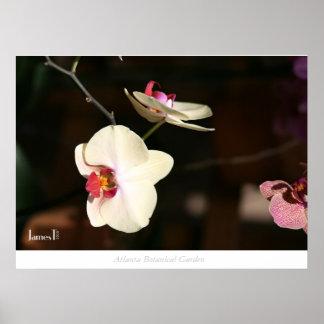 Flower - Atlanta Botanical Garden Poster