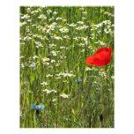 flower meadow in summer 21.5 cm x 28 cm flyer
