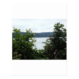 Flowering Shrubs on the Water Postcard