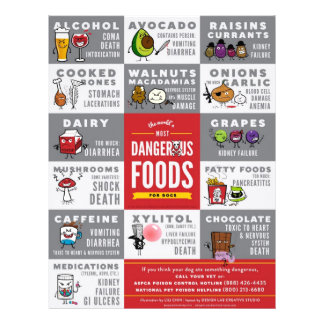 Flyers- The World's Most Dangerous Food For Dogs 21.5 Cm X 28 Cm Flyer