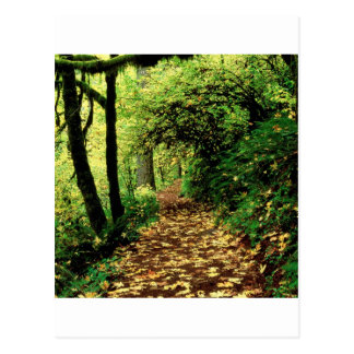Forest Maple Lined Silver Trail Silver Falls Postcard