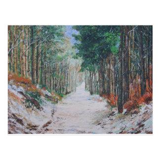 Forest walk, Yorkshire, England. Postcard
