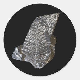 Fossilized Fern Leaves Photo on Black Round Sticker