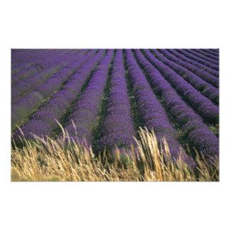 France, PACA, Alpes de Haute Provence, 2 Photograph