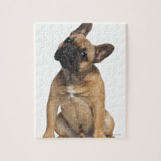 French Bulldog puppy (7 months old) Puzzle