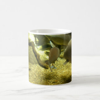 Freshwater Perch Fish Mug