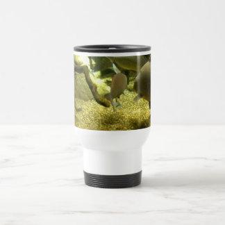 Freshwater Perch Fish Travel Mug