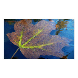 Frozen Fall Maple Leaf Late Autumn Nature Poster