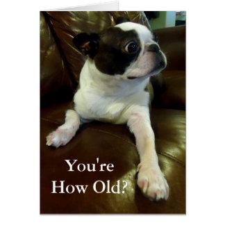 Funny Boston Terrier Birthday Card (Animal Rescue)