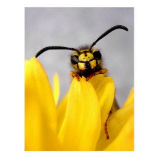 Funny Wasp Postcard