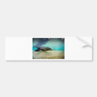 Galapagos Islands underwater seal lion Bumper Sticker