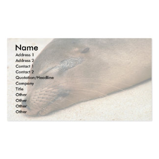 Galapagos Sea Lion Pack Of Standard Business Cards