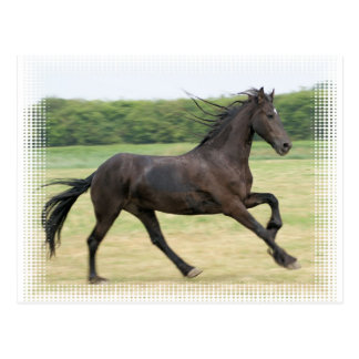 Galloping Friesian Postcard