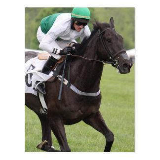Galloping Race Horse Postcard