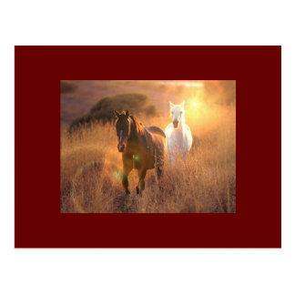 Galloping Wild Horses Postcard