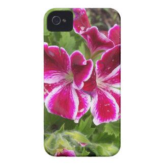 Geraniums iPhone 4 Cover