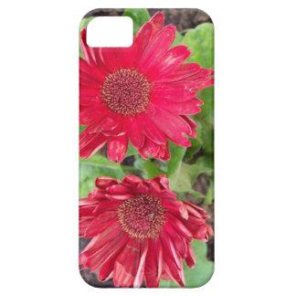 Gerbera Daisies iPhone 5 Covers
