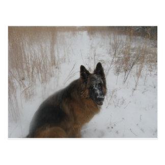 German Shephed Dog In Snowstorm Postcard