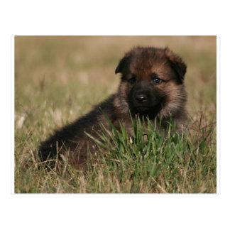 "German Shepherd Puppy ""The Lookout"" Postcard"